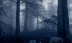 Лесной проводник