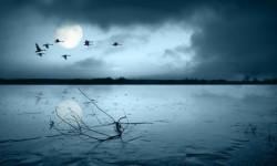 Происшествие на лесном озере