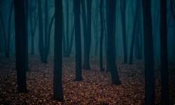 В темном лесу