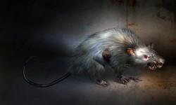 Кладбищенские крысы