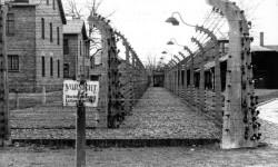 Выжившие в ужасе концлагеря