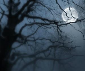 Ночной художник