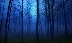 Жуткий лес и его жители