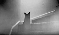 Кот Бася — борец с нечистой силой