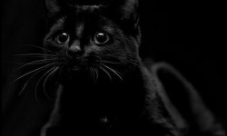 Заведи кошку